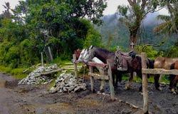 Cavallo su una mattina bagnata fotografia stock