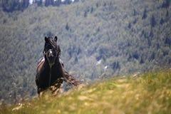 Cavallo su Velebit Immagine Stock