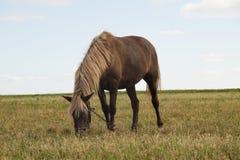 Cavallo sul pascolo fotografie stock