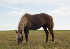 Cavallo sul pascolo immagine stock libera da diritti