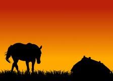 Cavallo sul pascolo al tramonto vicino alla scuderia Immagine Stock Libera da Diritti