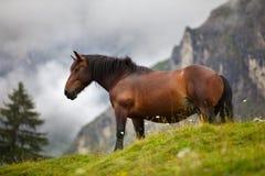 Cavallo sul pascolo alpino Immagine Stock Libera da Diritti