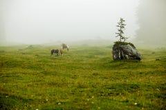 Cavallo sul pascolo alpino Immagini Stock Libere da Diritti