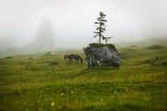 Cavallo sul pascolo alpino Fotografia Stock