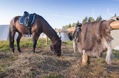 Cavallo sul pascolo vicino al recinto di legno Fotografia Stock