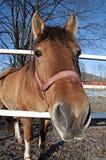 Cavallo sul recinto chiuso immagine stock libera da diritti
