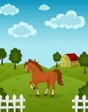 Cavallo sull'azienda agricola Fotografia Stock Libera da Diritti