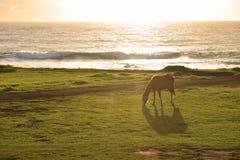 Cavallo sull'isola di pasqua Immagini Stock Libere da Diritti