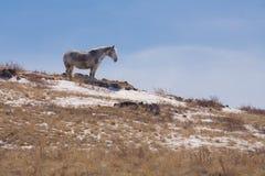 Cavallo sulla collina Immagine Stock Libera da Diritti