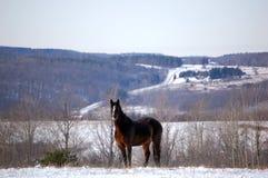Cavallo sulla montagna Fotografie Stock Libere da Diritti