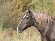 Cavallo sulla natura Fotografie Stock