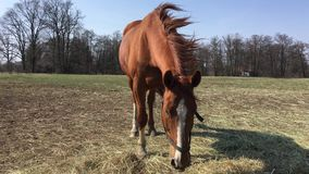 Cavallo sulla passerella video d archivio