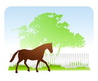 Cavallo sulla primavera dell'azienda agricola illustrazione di stock