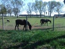 Cavallo sulla vacanza Fotografia Stock Libera da Diritti
