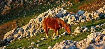Cavallo sulle rocce Fotografie Stock