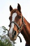 Cavallo sveglio immagini stock libere da diritti