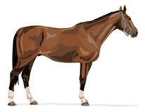 Cavallo tedesco diritto del warmblood Fotografia Stock