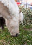 Cavallo testa consumo Prato Erba pony fotografia stock libera da diritti