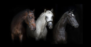 Cavallo tre sul nero Fotografia Stock Libera da Diritti