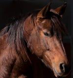 Cavallo triste Fotografia Stock