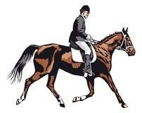 Cavallo trottante con il cavaliere sul torneo Immagini Stock