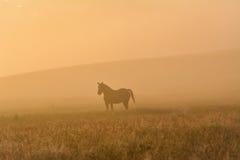 Cavallo in un campo nebbioso Fotografia Stock