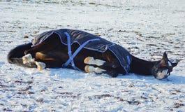 cavallo in un cavallo-panno che si trova sul campo nevoso Immagine Stock Libera da Diritti