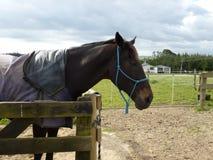 Cavallo in un Corral Fotografia Stock Libera da Diritti