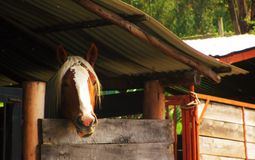 Cavallo in un granaio fotografia stock libera da diritti