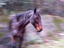 Cavallo in un movimento Fotografie Stock Libere da Diritti