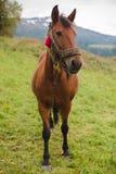 Cavallo in un pascolo nelle montagne Immagine Stock