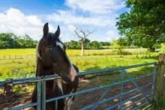 Cavallo in un recinto per bestiame Fotografia Stock Libera da Diritti