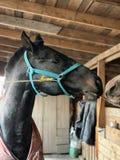 Cavallo in una stalla fotografia stock libera da diritti