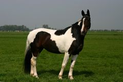 Cavallo verniciato Fotografia Stock Libera da Diritti