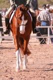 Cavallo verniciato di esposizione Fotografie Stock Libere da Diritti