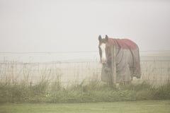 Cavallo vestito Immagine Stock