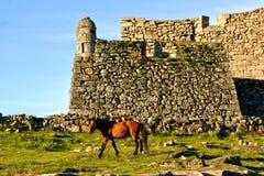Cavallo vicino al castello di Lindoso in parco nazionale di Peneda Geres immagini stock