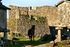 Cavallo vicino al castello di Lindoso in parco nazionale di Peneda Geres immagine stock
