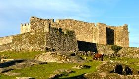 Cavallo vicino al castello di Lindoso in parco nazionale di Peneda Geres fotografia stock libera da diritti
