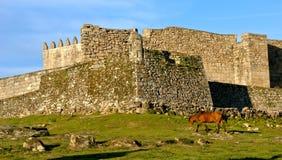 Cavallo vicino al castello di Lindoso in parco nazionale di Peneda Geres fotografie stock
