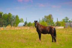 Cavallo vicino al villaggio Immagine Stock Libera da Diritti