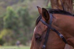 Cavallo vicino su sulla testa Fotografie Stock Libere da Diritti