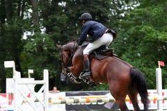 Cavalo imagem de stock royalty free