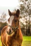 Cavalo Fotos de Stock Royalty Free