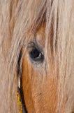 Cavalo Imagem de Stock