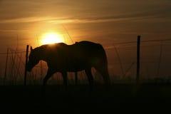 cavalo 3799 Imagem de Stock Royalty Free