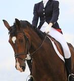 Cavalo Imagens de Stock Royalty Free