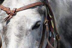 Cavalo Foto de Stock
