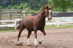 Cavalo imagens de stock