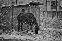 Cavalo abandonado foto de stock royalty free